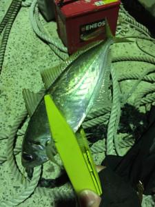 160211_fishingAJI