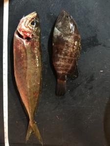 160211_fishingsize